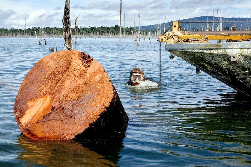 Stauseeholz Walaba Taucher Holz Land Köster