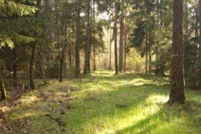 Wald bei Auma im Vogtland