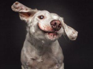 perro-13