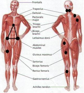 Trigger point areas to find with a tennis ball for ...
