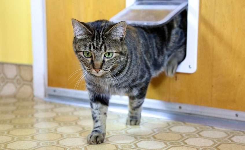 cat-flat-door-installation-cost