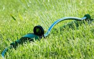 watering-plands