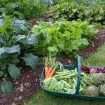 Improve Your Home Garden Converting it into a Vegetable Garden