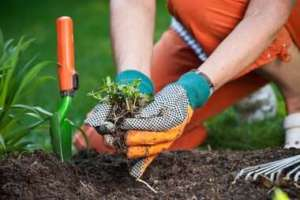 planting-a-new-vegetable-garden