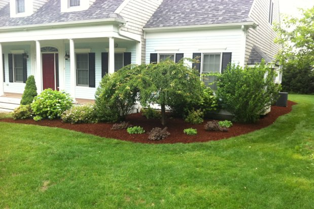 Tree Shrub Service Bushes Hedges Planting Pruning Amp Cost