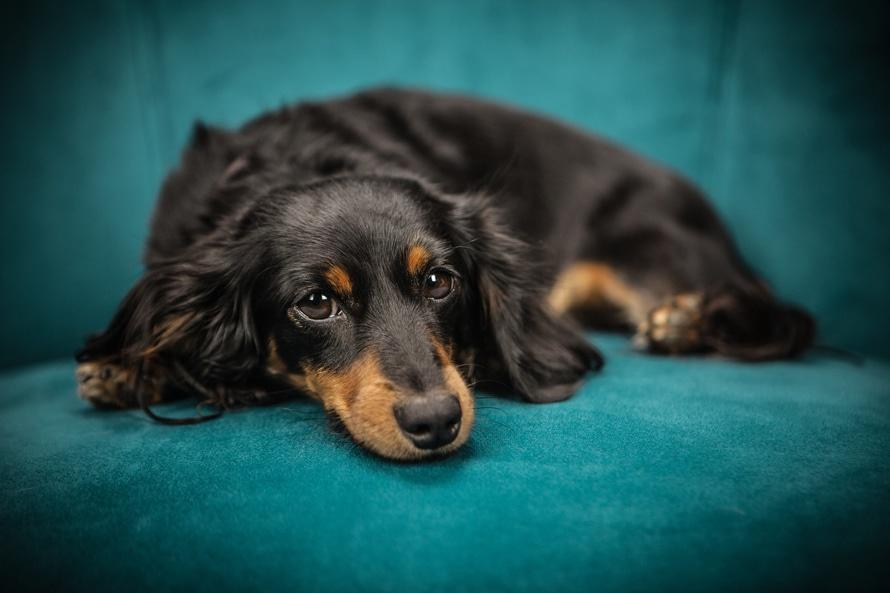 Solutions For Removing Pet Odor HomeAdvisor