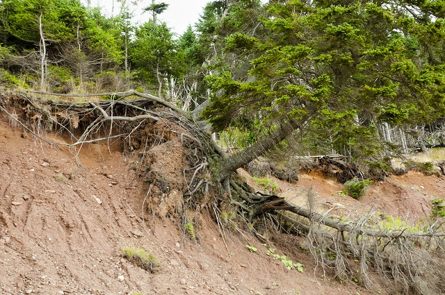 Mudslide, landslide trees and terrain