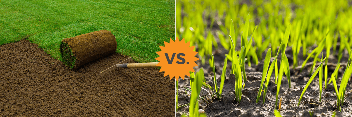2019 Grass Seed Vs Sod Rolls Costs Amp Differences