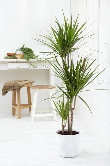 Indoor Plants Easy Take Care