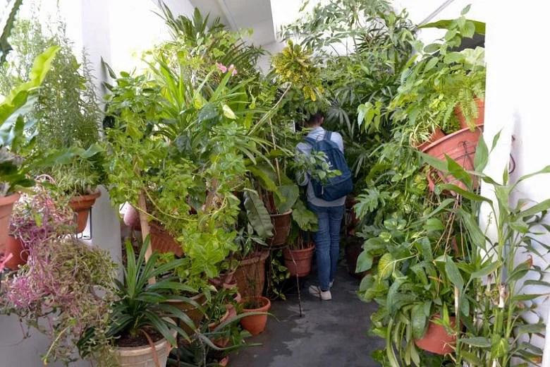 Have You Seen This Jungle House At A Pasir Ris Hdb Flat