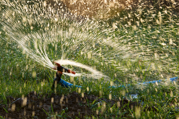 Fall lawn maintenance and watering