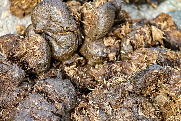 Winter garden soil preparation with manure for spring planting