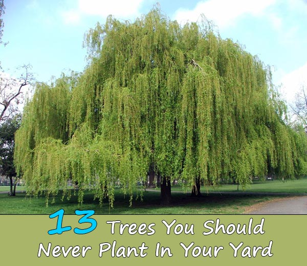 Image Result For Cutting Trees Down On Your Own Property