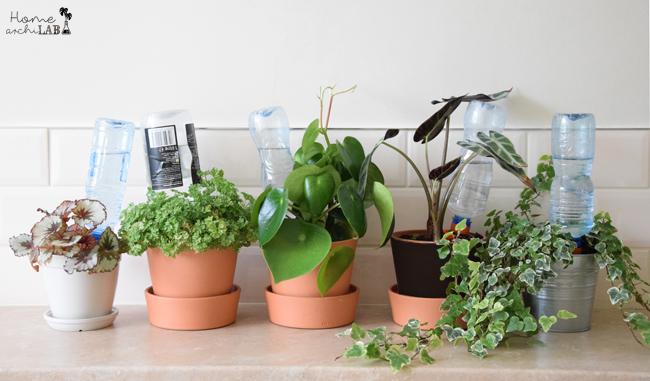 Cómo regar las plantas en vacaciones Aplicación del sistema de auto-riego con conos cerámicos