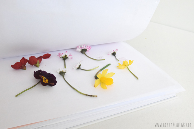 como secar flores