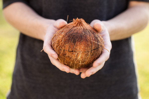 Raw coconut being opened