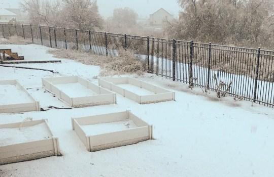 Joyful Gardening in January – Utah County