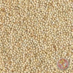 Goldfinch Millet Malt - 2 LB
