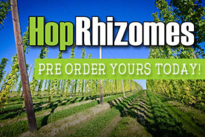 grow your own hops rhizomes