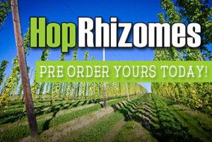 grow your own hops rhizomes