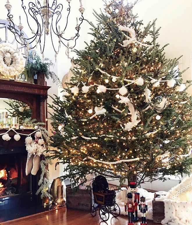 Fraser Fir Christmas tree Natural Christmas Tree 12 ft Fraser Fir Christmas tree Fraser Fir Christmas tree Natural Christmas Tree #FraserFirChristmastree #Christmastree #NaturalChristmasTree