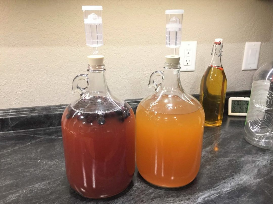 two glass carboys with airlocks on top filled with fermenting apple cider