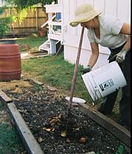 food scrap soil