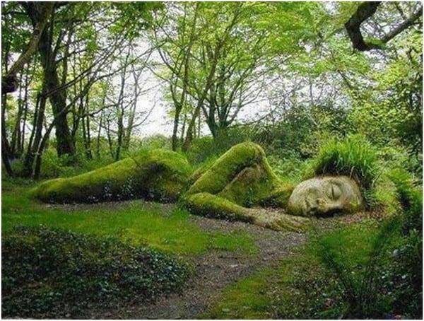 Sculptural garden plants