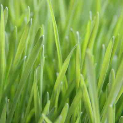Lawn Care: The Basics of Lawn Maintenance
