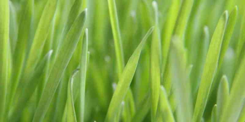Green Grass - Lawn Care - Tips for Lawn Maintenance