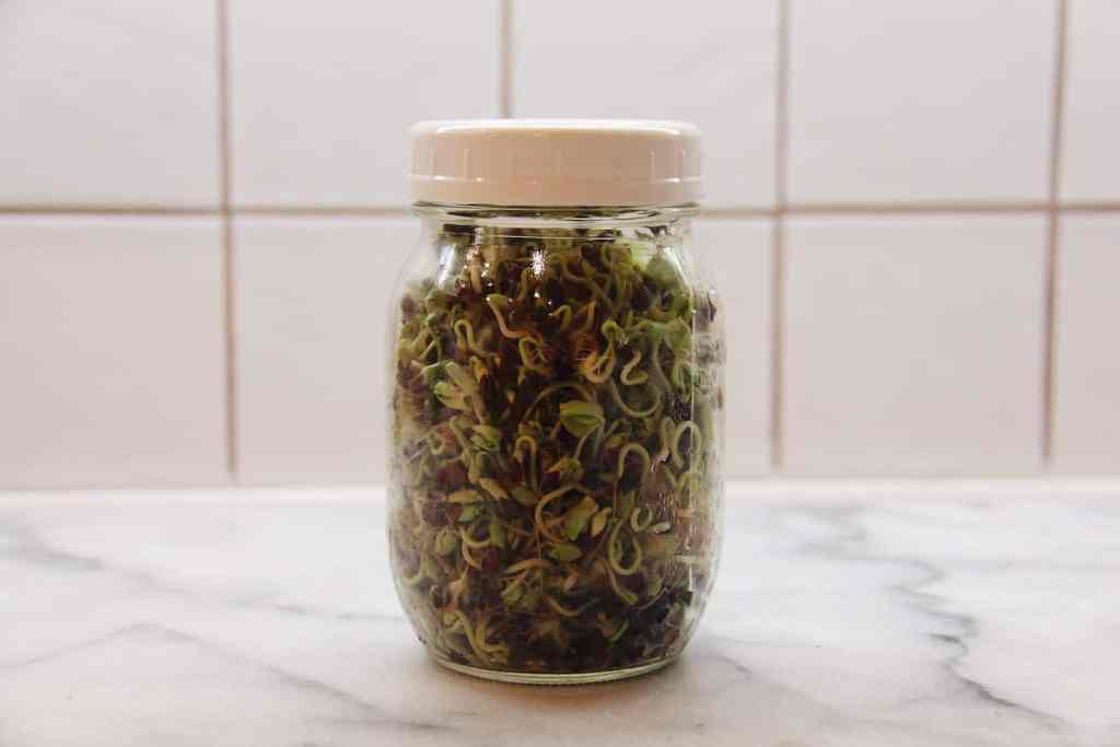 How to Grow Sprouts at Home in Your Kitchen