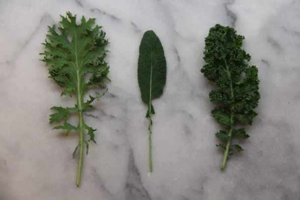Different Types of Organic Kale   Home for the Harvest Gardening Blog