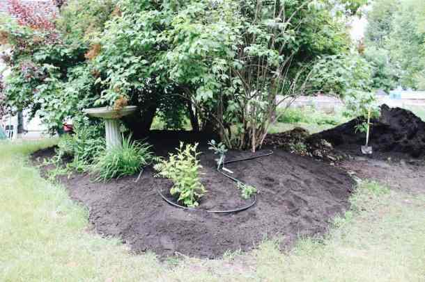 Laying organic mulch on a perennial garden | Home for the Harvest Gardening Blog