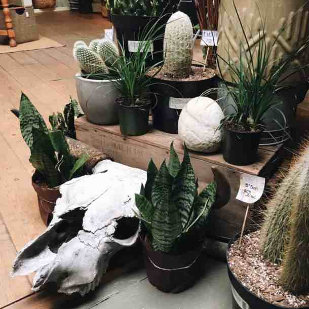 Bellaflora Floral Design Studio in Nelson BC - Cactus Display | Home for the Harvest Blog