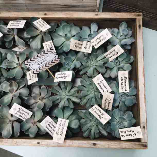 Bellaflora Floral Design Studio in Nelson BC - Succulent Tray | Home for the Harvest Blog