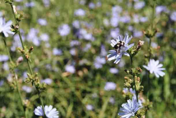 Attract pollinators to your eco-friendly garden with these environmentally-friendly gardening tips! #ecogarden #ecofriendlygarden #savethebees #pollinatorgarden