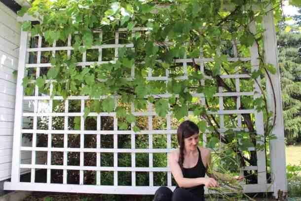 Grapevines | Home for the Harvest Blog