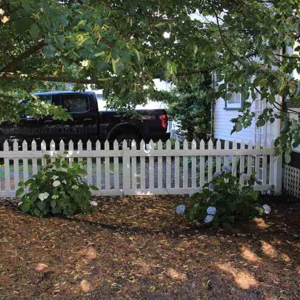 New Hydrangea Shrubs | Home for the Harvest Gardening Blog