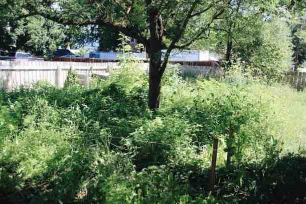 Overgrown Garden | Home for the Harvest Blog