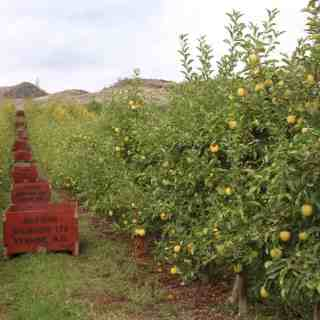 Apple Crates at Davison Orchards | Home for the Harvest