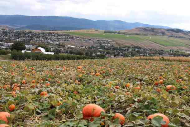 Davison Orchards Pumpkin Patch | Home for the Harvest