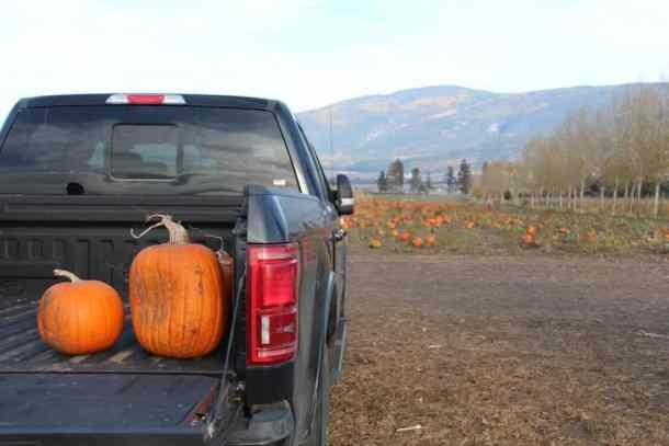 Armstrong Pumpkin Patch | Home for the Harvest