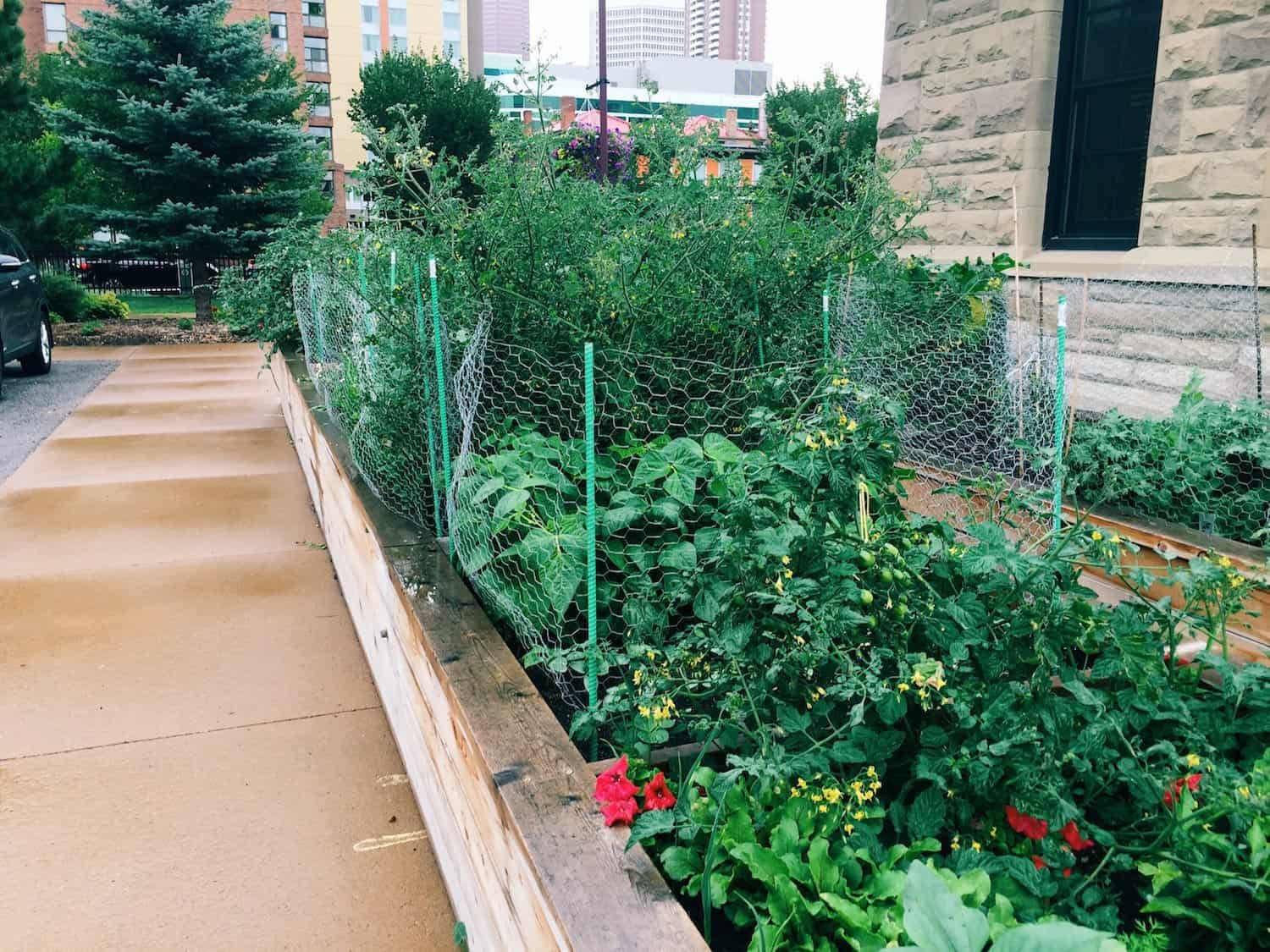 What it 39 s like to join a community garden home for the for Canadian gardening tips