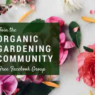 Organic Gardening Community - A Free Facebook Group for New and Experienced Gardeners | Home for the Harvest