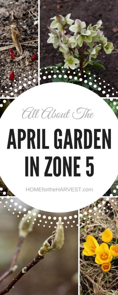 April Gardening - Zone 5 | Home for the Harvest