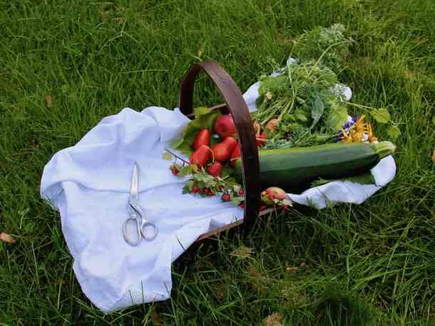 How to Start a Garden - Harvest Season | Home for the Harvest