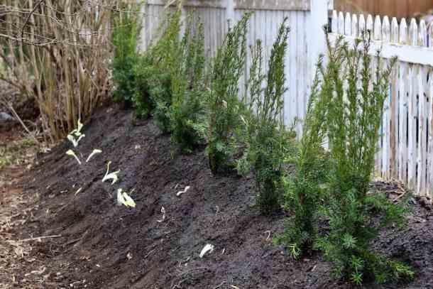 Hugelkultur Bed Perennials | Home for the Harvest