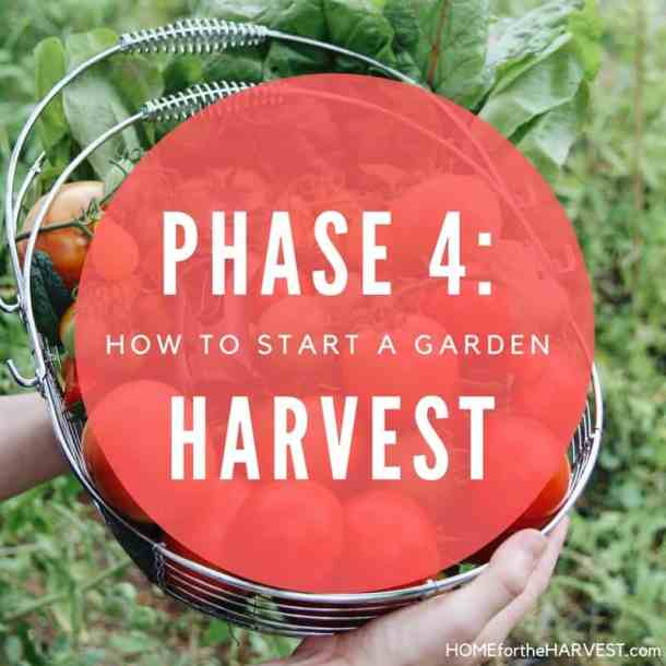 Phase 4: Harvest the Garden - How to Start a Garden   Home for the Harvest