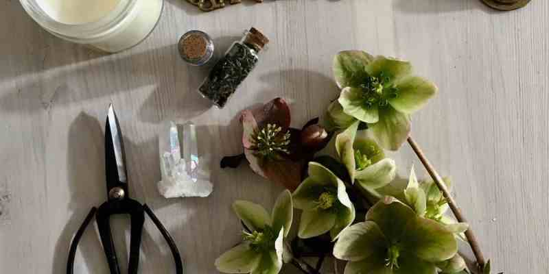 witch garden bits and pieces including hellebores, soy candle, floral scissors, nettles, and crystals