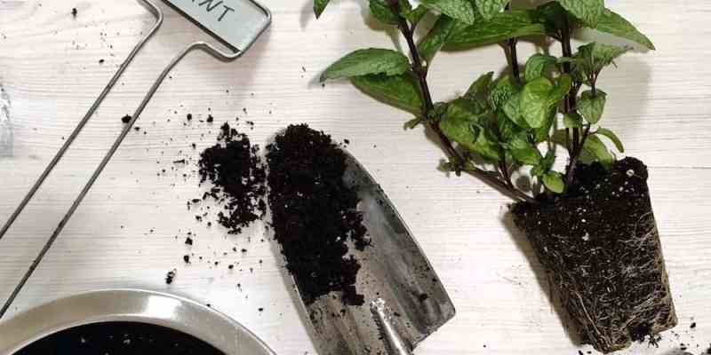 Detailed tutorial for planting an Organic Container Herb Garden that's both beautiful and delicious   Home for the Harvest